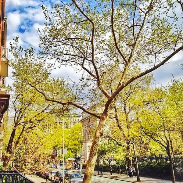Washington Square Park Spring