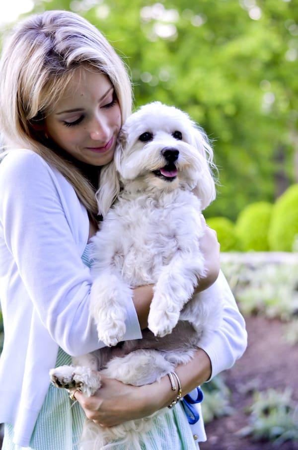 Katies Bliss Havanese Puppy