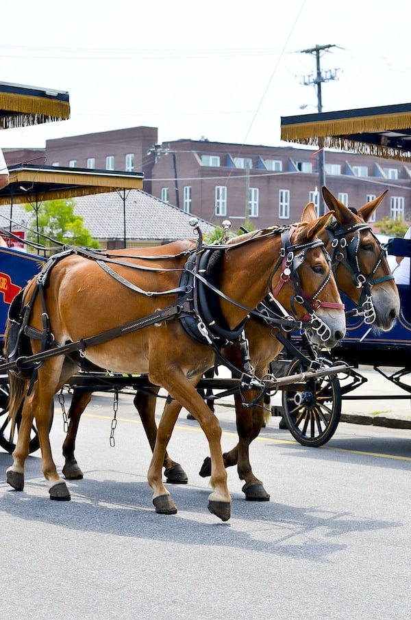 Historic Charleston Carriage Ride