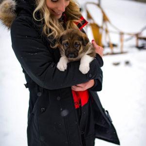 Dog Sledding Finland