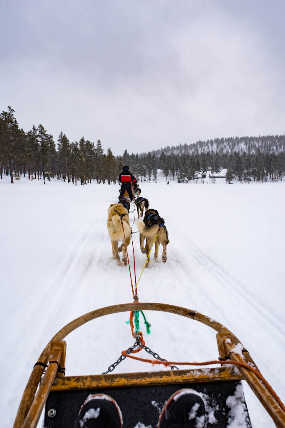 Dogsledding in Lapland Finland
