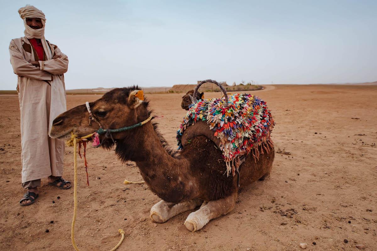 Camel Riding in Marrakech Morocco
