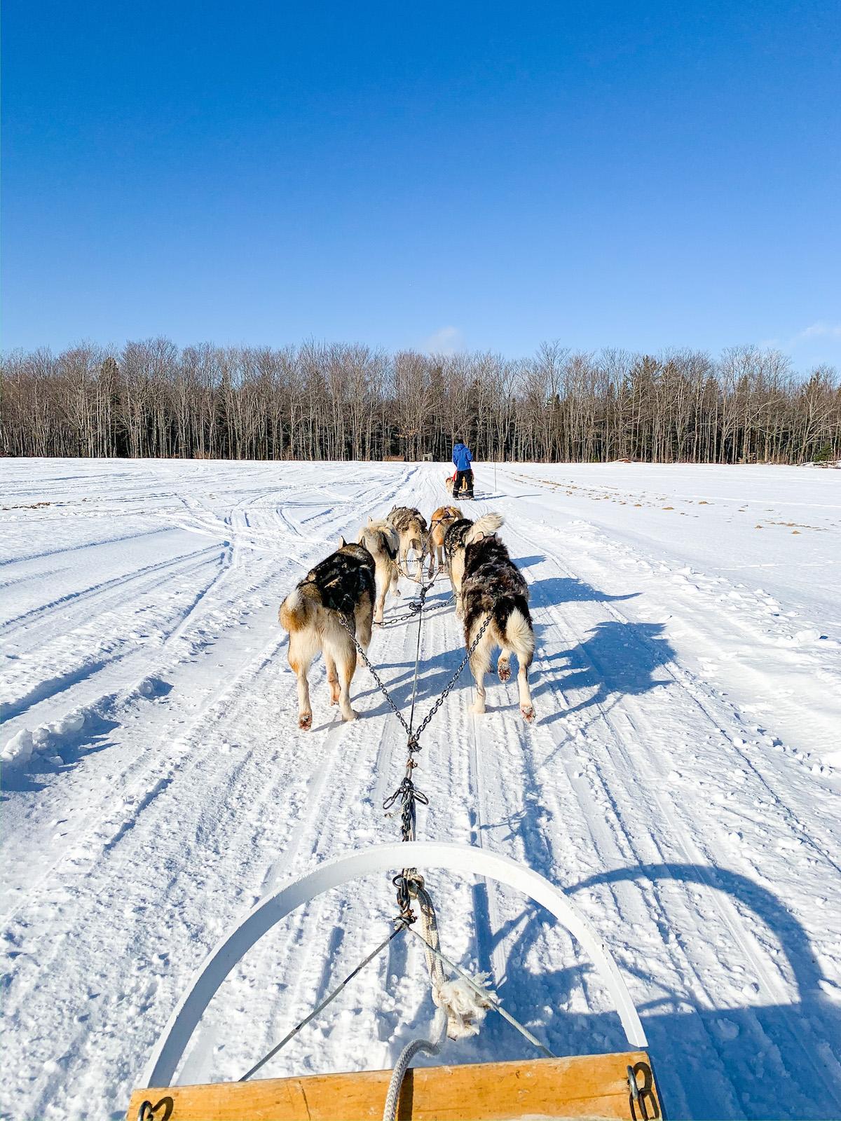 Quebec City Dogsledding