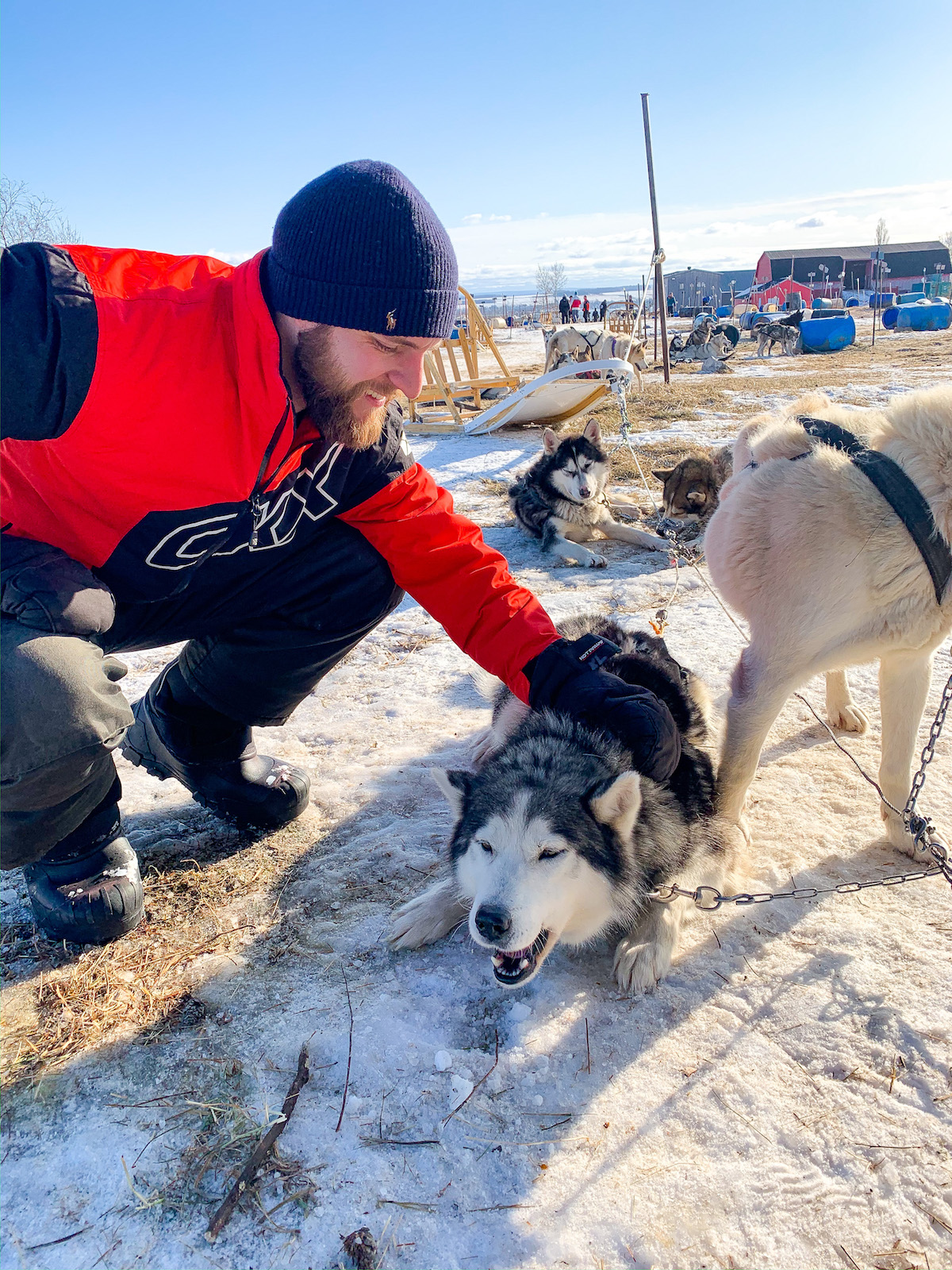 Quebec City Dogsledding
